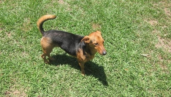 Street dogs in Costa Rica: Jessie, found a home in Puriscal, Costa Rica